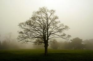 Fog#1 Tree