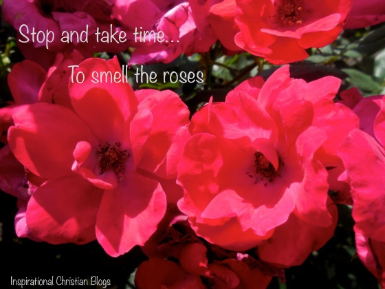Take time to smell the roses