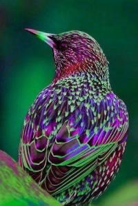 *Bird