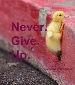 _Never Give Up