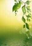leaves-69999_960_720