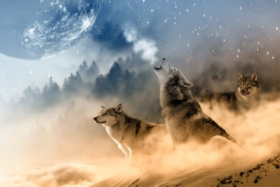 wolves-1400819_960_720