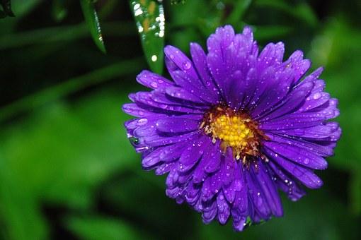 flower-22674__340
